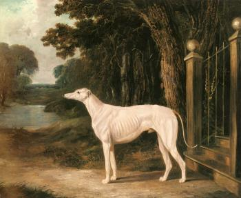 Vandeau, A White Greyhound